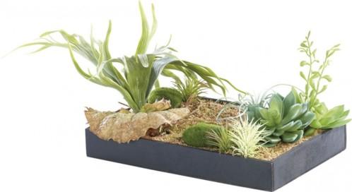 Tableau végétal avec cadre - Herbacées - 30 x 20 cm