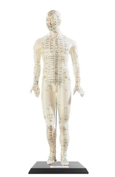 Modèle d'acupuncture 45 cm - Homme