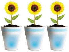 3 pots lumineux LED pour plante