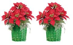 2 compositions florales de Noël avec poinsettias et panier tissé