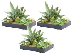 3 tableaux végétaux artificiels avec cadre - Succulentes - 30 x 20 cm