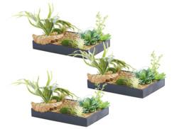 3 tableaux végétaux avec cadre - Herbacées - 30 x 20 cm