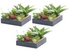 3 tableaux végétaux avec cadre - Succulentes - 20 x 20 cm