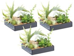 3 tableaux végétaux avec cadre - Herbacées - 20 x 20 cm