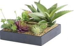 Tableau végétal avec cadre - Succulentes - 20 x 20 cm