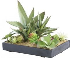 Tableau végétal artificiel avec cadre - Succulentes - 30 x 20 cm