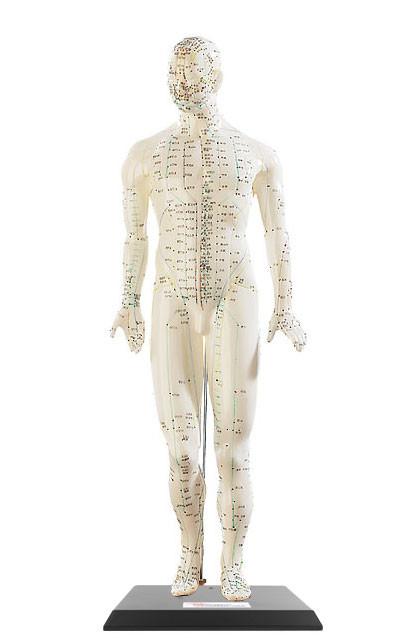 Mannequin D Apprentissage De L Acupuncture Avec Indications Pearl Fr